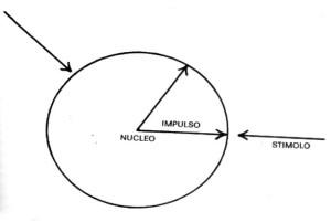 bioenergetica - equilibrio